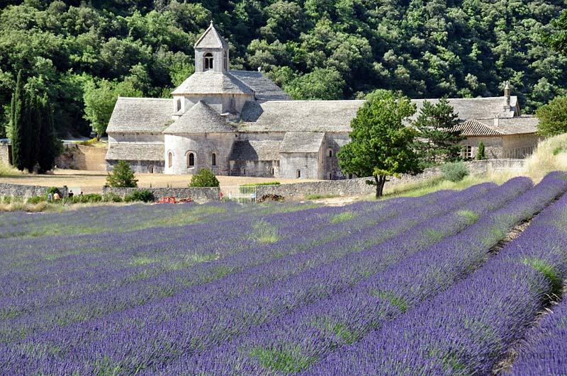 Abbeys photo lavender-senanque0041b.jpg