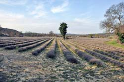This lavender field just southeast of