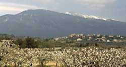 Ventoux Mountain photo ventoux07.jpg (7 k)