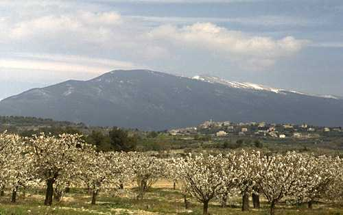 Ventoux Mountain photo ventoux07B.jpg