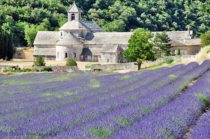 Lavender Fields France Map.Lavender Fields Of Provence Provencal Themes And Traditions By