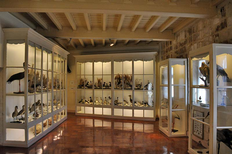 Display of regional birds in Maison
